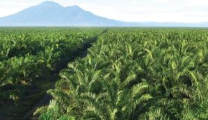 Tersebar di 98 Kabupaten, Konflik Agraria Didominasi Sektor Perkebunan dan Kehutanan